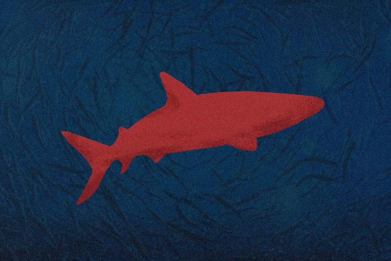 tiburones-indefensos-1280x853.jpg